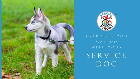 Exercises-you-can-do-with-your-service-dog-edit